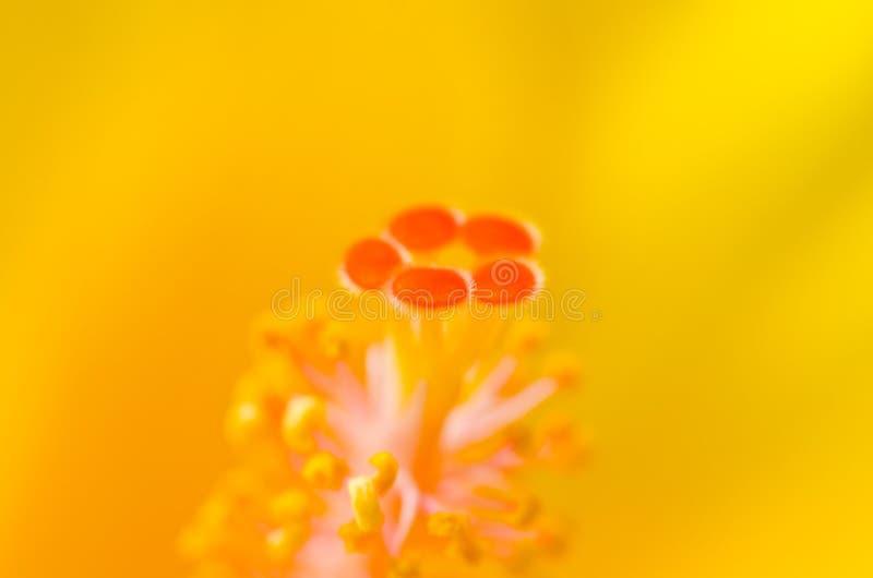 Download Carpel stock photo. Image of bloom, macro, nature, plant - 27155344