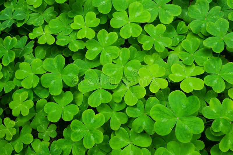 Carpet of clover stock photography