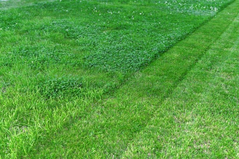 Carpet of lush green lawn half beveled. A carpet of luscious green lawn is half mowed royalty free stock photo