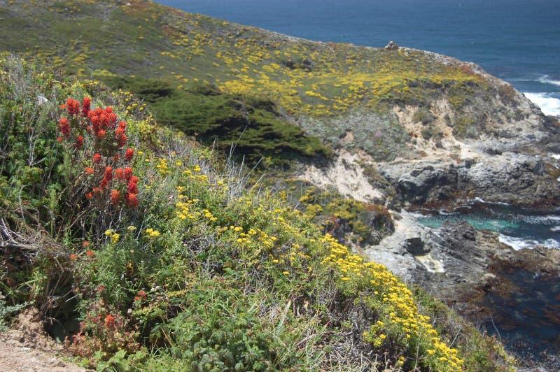 Carpet of wild flowers on Big Sur coast, California royalty free stock image