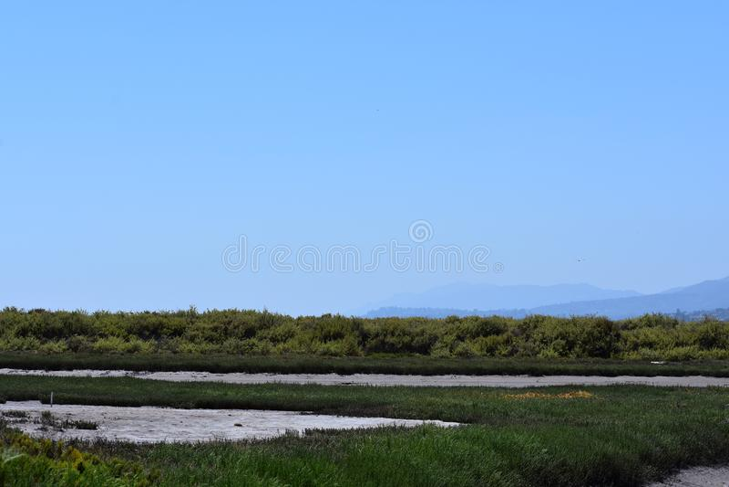 Carpinteria Solankowego bagna natury park, 1 obrazy stock