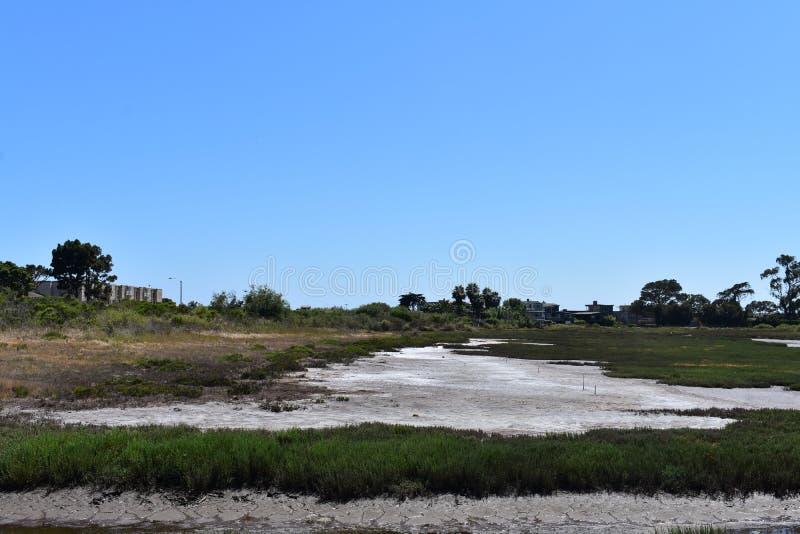 Carpinteria Solankowego bagna natury park, 3 zdjęcia royalty free