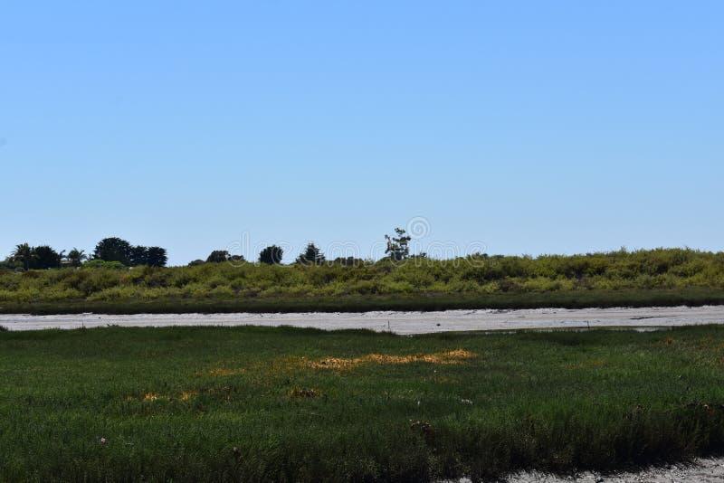 Carpinteria Solankowego bagna natury park, 5 obraz stock