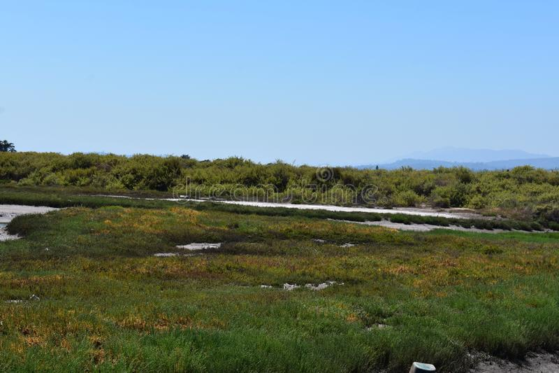 Carpinteria Solankowego bagna natury park, 6 obrazy royalty free