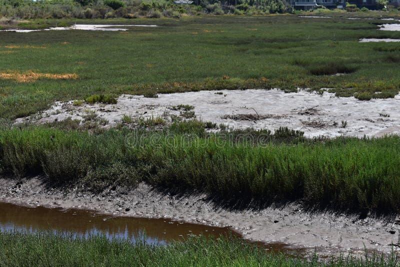 Carpinteria Solankowego bagna natury park, 8 obraz stock