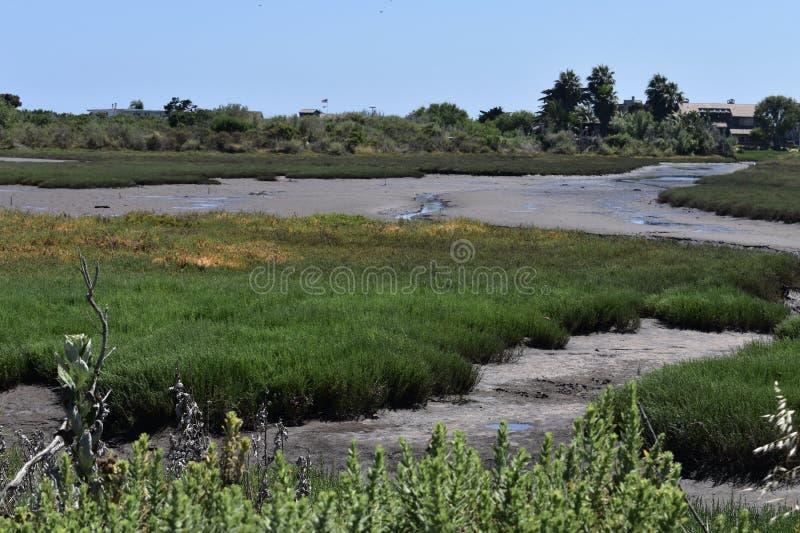 Carpinteria Solankowego bagna natury park, 9 obraz royalty free