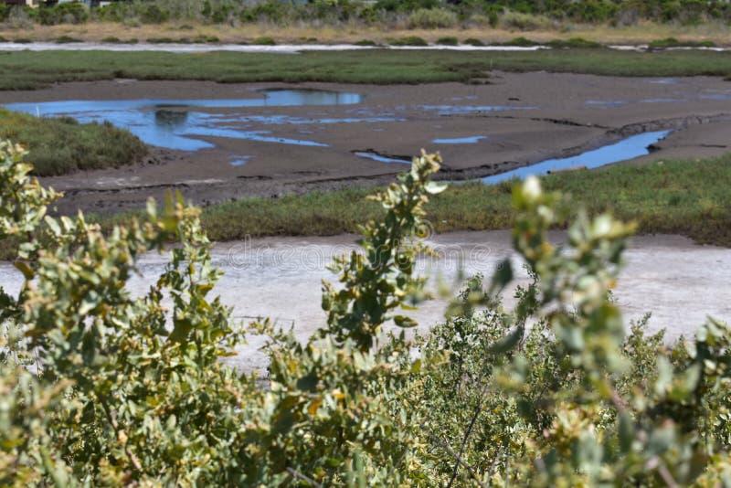 Carpinteria Solankowego bagna natury park, 14 fotografia stock