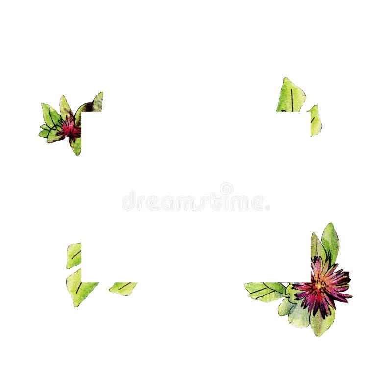 Carpobrotus edulis, uma planta suculento, região o mediterrâneo ilustração royalty free