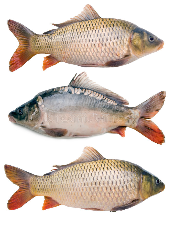Download Carps Collection Stock Images - Image: 7638944
