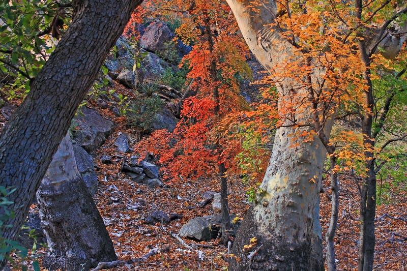 Carr Canyon im Fall stockfotografie