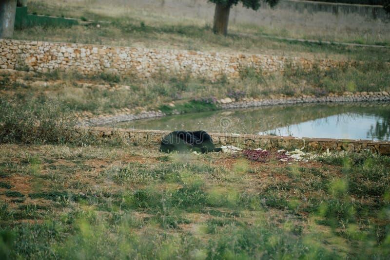 Carregue no jardim zoológico do safari no apulia Itália de Fasano fotos de stock