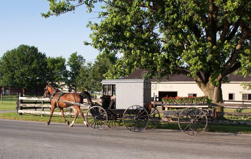 Carrello dei Amish e carrello del fiore fotografia stock libera da diritti