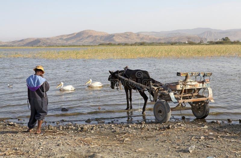 Carrello etiopico del cavallo immagini stock