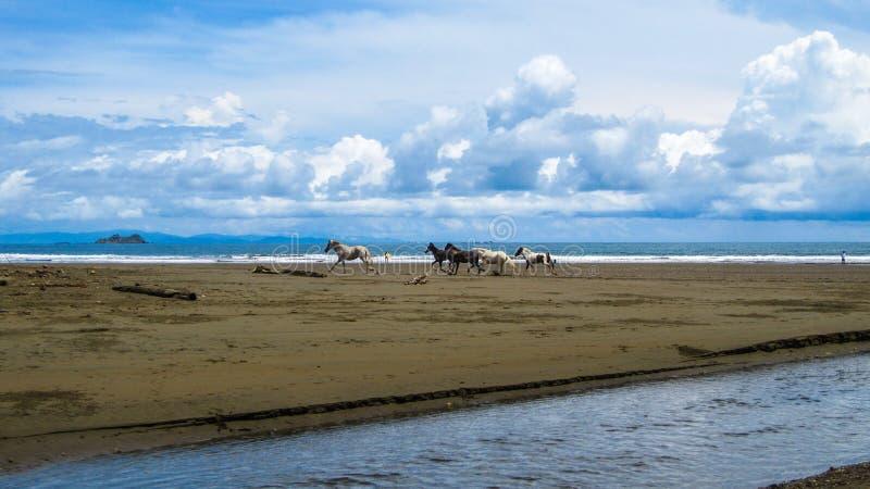 Carrera de caballos salvaje fotografía de archivo
