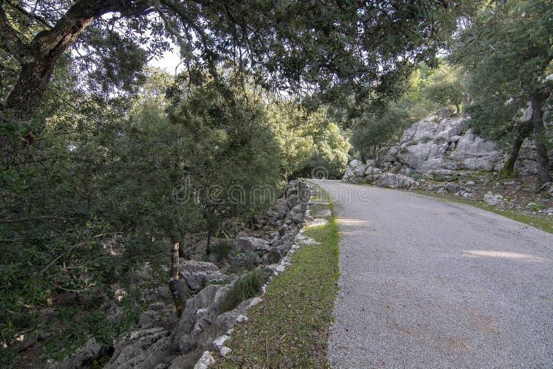 Carretera asfalto curvada a través del bosque imperecedero verde rocoso fotografía de archivo libre de regalías