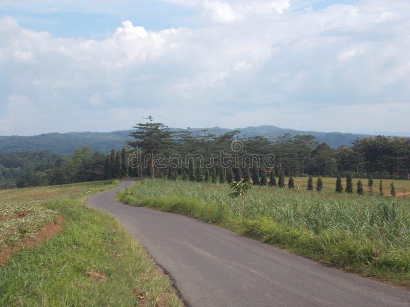 Carretera con curvas en la monta?a fotografía de archivo
