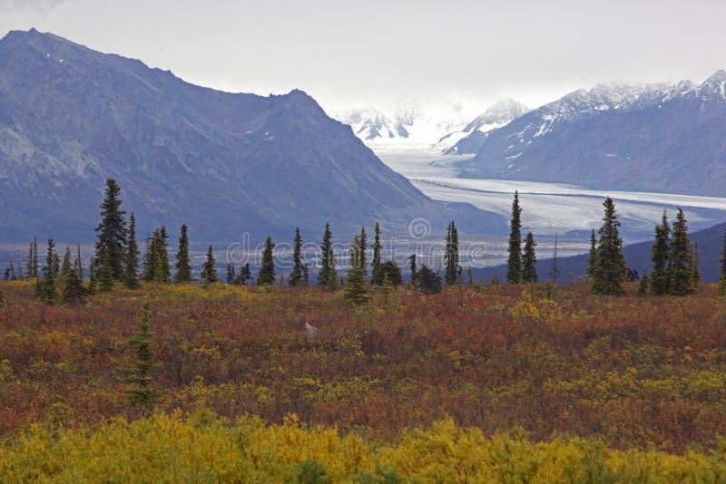 Carretera de Alaska Glenn en otoño imagenes de archivo