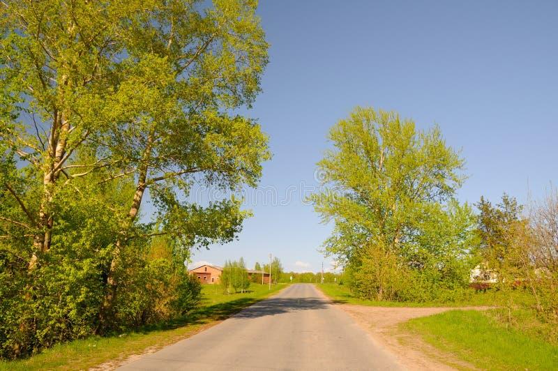 Carretera de asfalto con los álamos foto de archivo