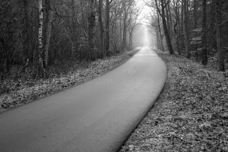 Carretera de asfalto de niebla del bosque de los misterios fotos de archivo