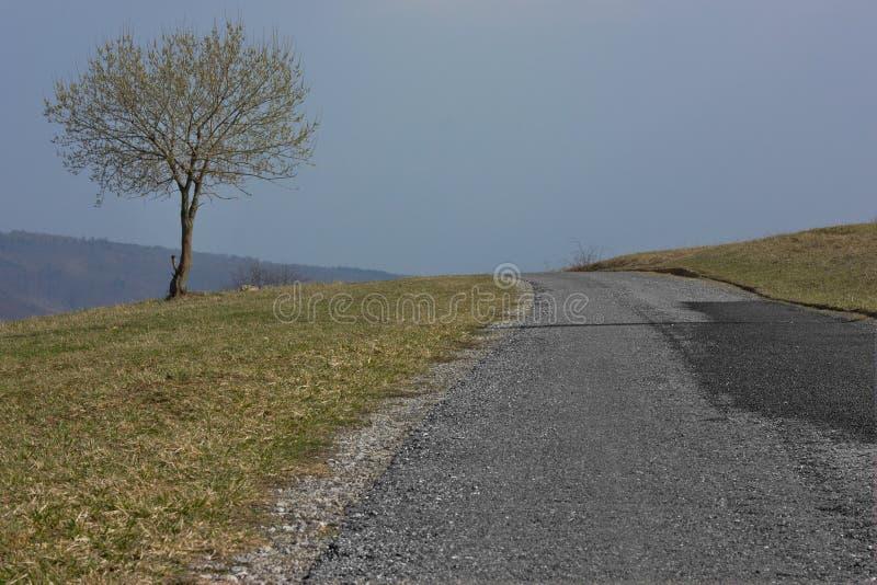 Carretera de asfalto del misterio en naturaleza fotos de archivo