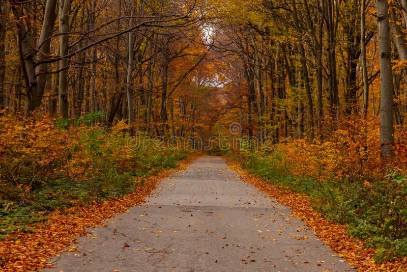 Carretera de asfalto en un bosque hermoso del otoño imagen de archivo