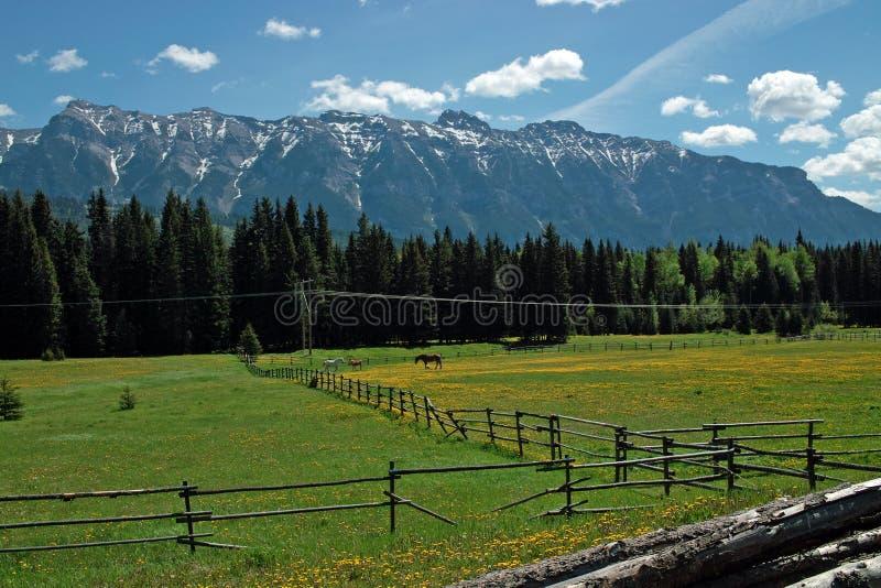 Carretera de la jerarquía de cuervos, A.C. Canadá. foto de archivo