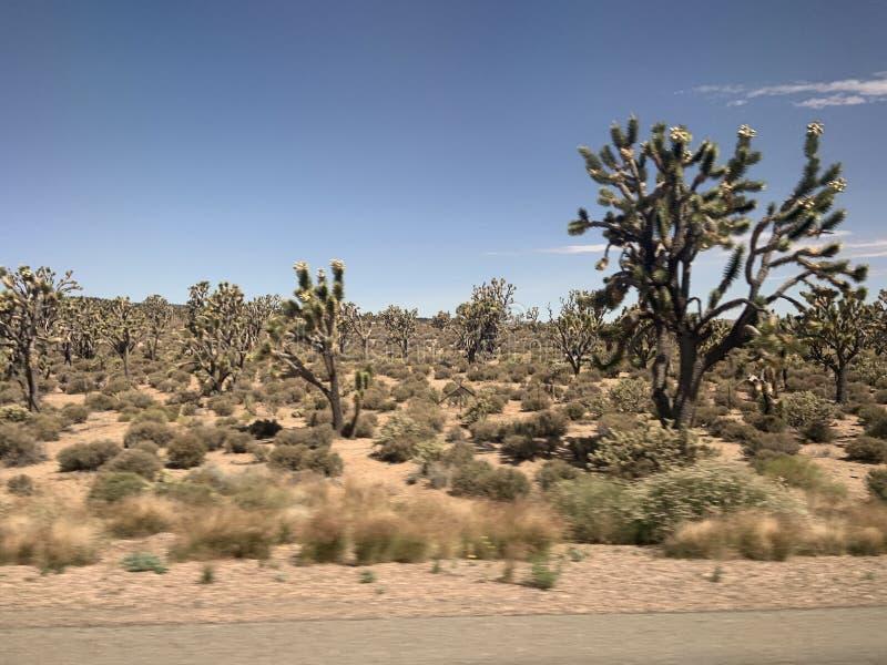 Carretera del desierto de Arizona imagenes de archivo