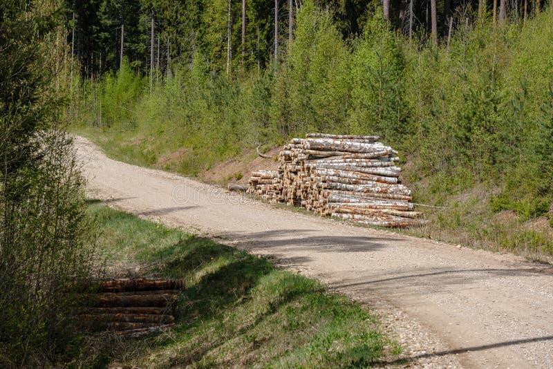 carretera nacional de la grava en bosque verde con los troncos de árbol en pilas grandes en el lado imagenes de archivo