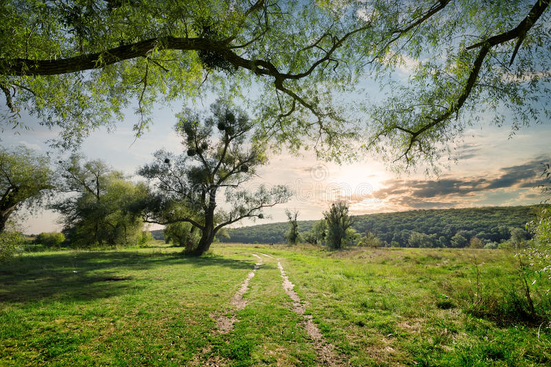 Carretera nacional en bosque del verano imagen de archivo libre de regalías