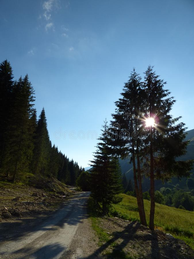 Carretera nacional en montañas y sol del ` s de Montenegro detrás de los árboles imagenes de archivo