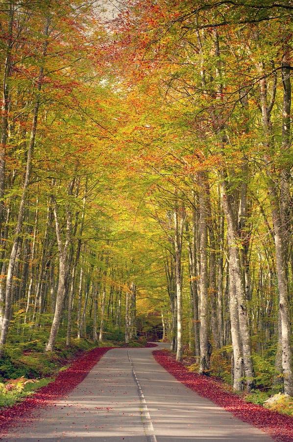 Carretera nacional en un bosque del árbol de haya, colores hermosos del otoño imagen de archivo