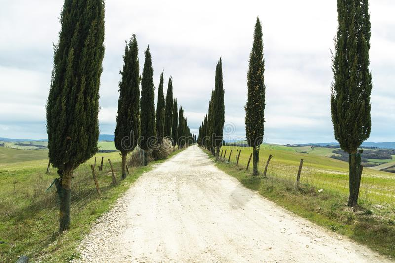 Carretera nacional entre los cipreses delante de la amplia área de Toscana foto de archivo libre de regalías