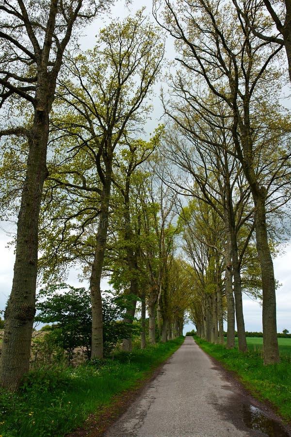 Carretera nacional que corre vía el callejón de los árboles imagen de archivo