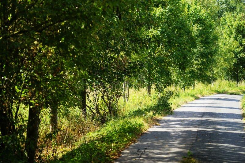 Carretera nacional sola en verano foto de archivo