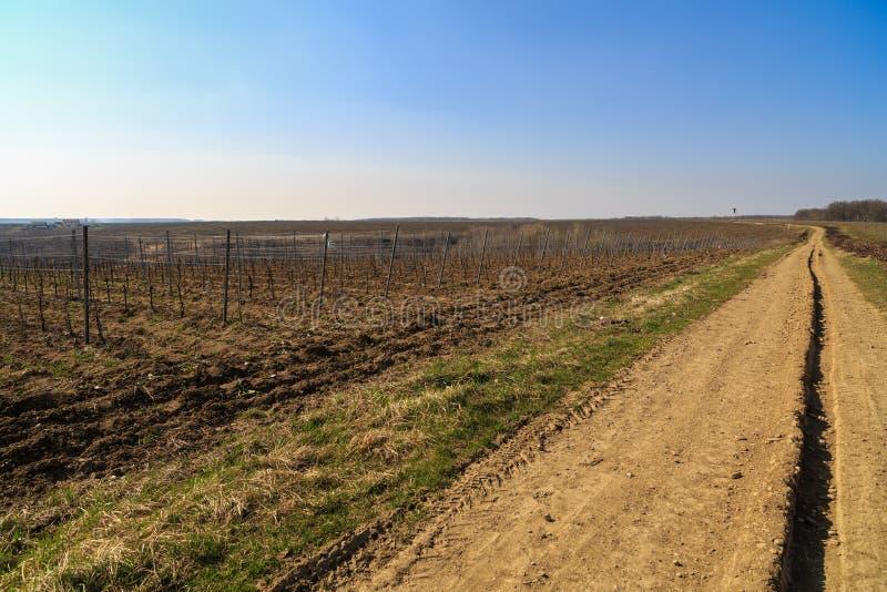 Carretera nacional a través de una plantación de la vid imagen de archivo libre de regalías