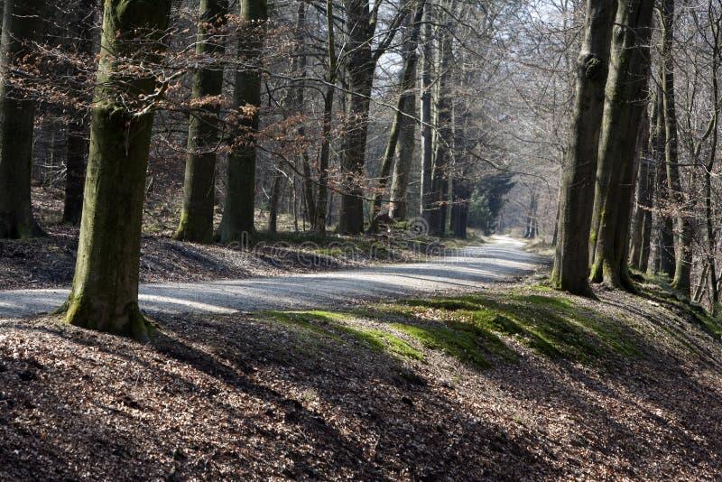 Carretera nacional a través del bosque fotografía de archivo libre de regalías