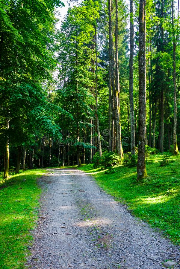 Carretera nacional a través del bosque en luz de la tarde fotografía de archivo libre de regalías