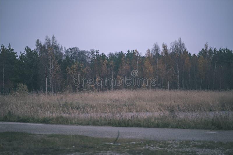 carretera nacional vacía en el otoño cubierto en hojas amarillas en parque entre los troncos de árbol  imagen de archivo libre de regalías