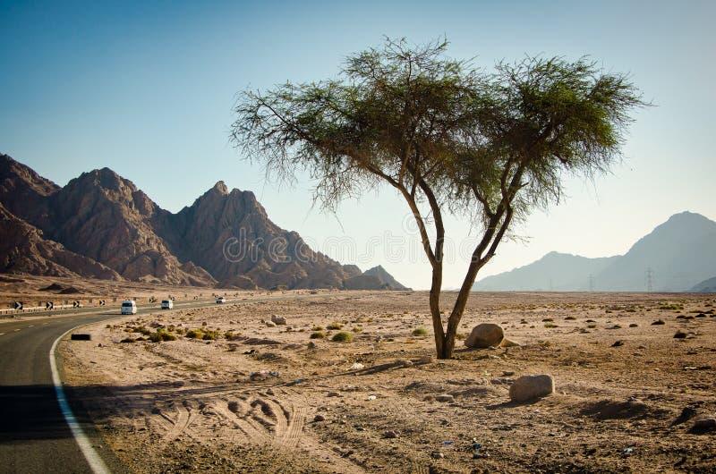 Carretera principal con el árbol a solas en el desierto de Sinaí entre las montañas fotografía de archivo libre de regalías
