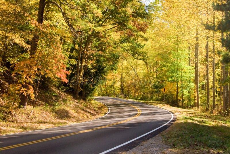 Carretera a través del bosque fotos de archivo