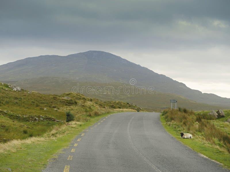 Carretera vacía en el parque nacional de Connemara, una oveja durmiendo al lado de una carretera, Montaña al fondo, Nubes bajas foto de archivo libre de regalías