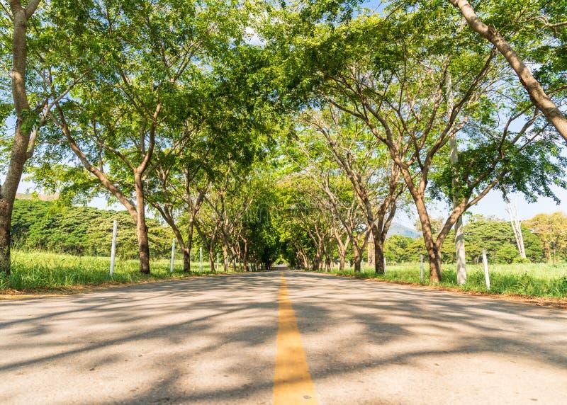 Carreteras asfaltadas con túnel de árbol fotografía de archivo libre de regalías
