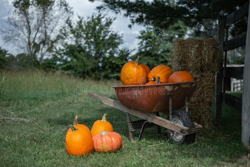 Carretilla de las calabazas que se sientan en un campo de granja con las balas de heno y de paja foto de archivo libre de regalías