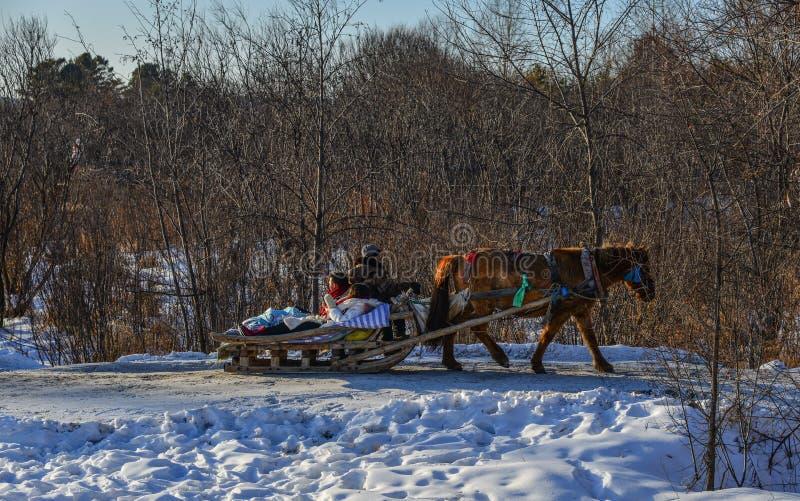 Carretto del cavallo che corre sulla strada della neve immagine stock libera da diritti