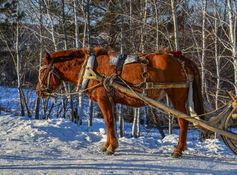 Carretto del cavallo che corre sulla strada della neve fotografie stock