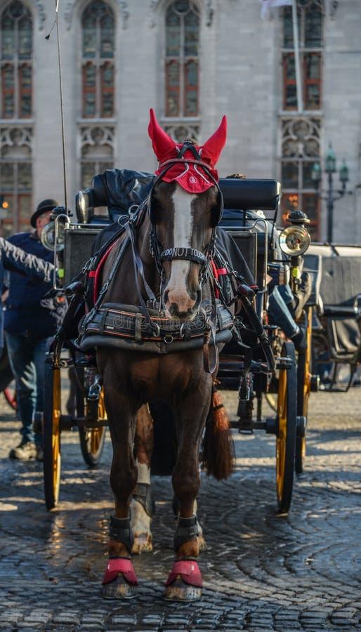 Carretto del cavallo nella bella città di Bruges, Belgio immagini stock