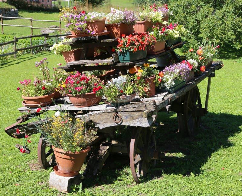 Carretto di legno con i vasi da fiori per decorare il for Fiori grassi da giardino