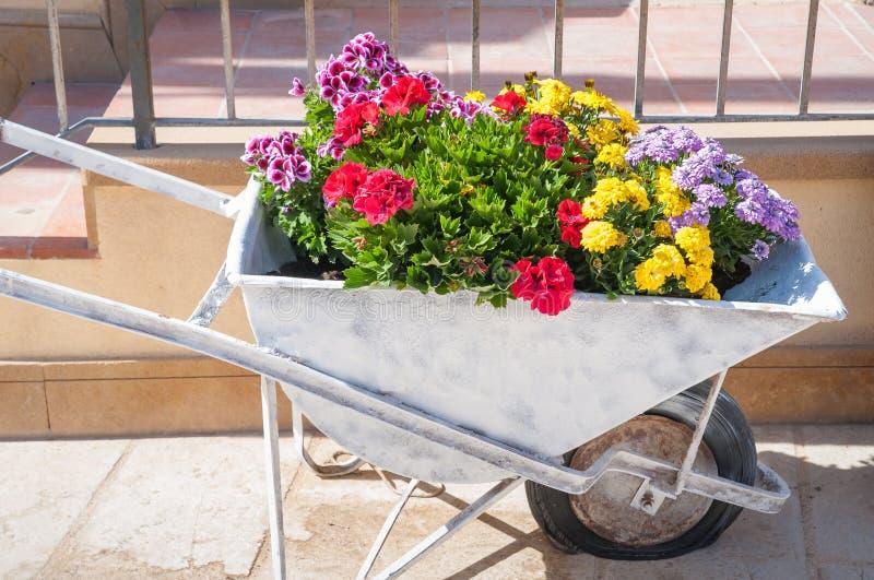 Download Carretto fiorito di spinta fotografia stock. Immagine di floreale - 55351604