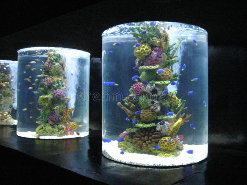 Carri armati di pesce dentro il oceanarium, parco dell'oceano di Manila, Manila immagini stock libere da diritti