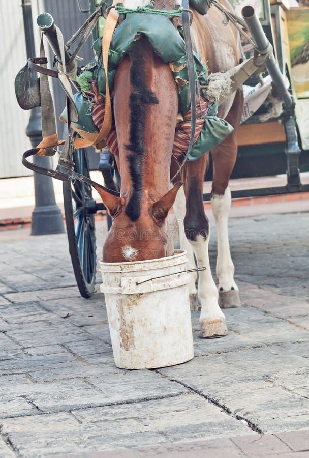 Carriage bay horsein Canto Domingo, Dominican Republlic. Cloudy royalty free stock photos
